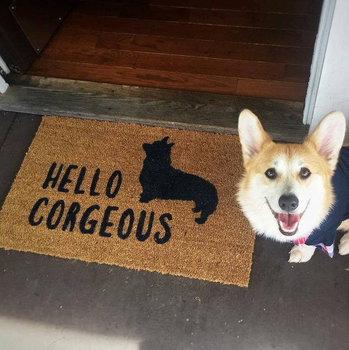 Hello Corgeous Doormat | Welcome Mat | Door Mat | Outdoor Rug | Unique Corgi