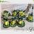 Hat - FSL lights / 4x4 hoop