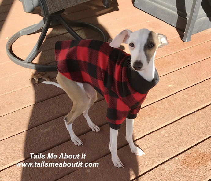 READY TO SHIP - Red/Black Checkered Print Fleece Sweatshirt
