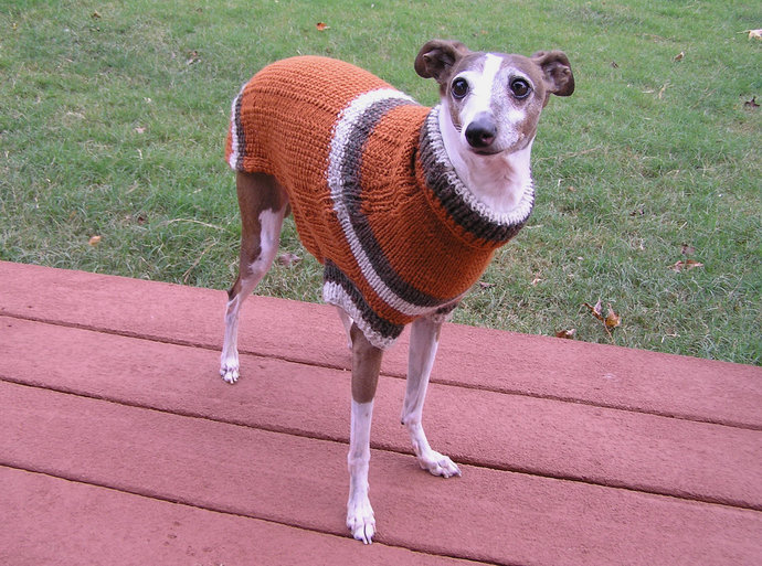 READY TO SHIP - Oxford Hand Knit Dog Sweater - Small Dog