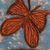Butterfly Flight Canvas