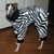 Zebra dog pajama