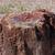 Petrified Wood Sterling Necklace Natural Arizona AZ Agatized Wood Agate Tan Gray