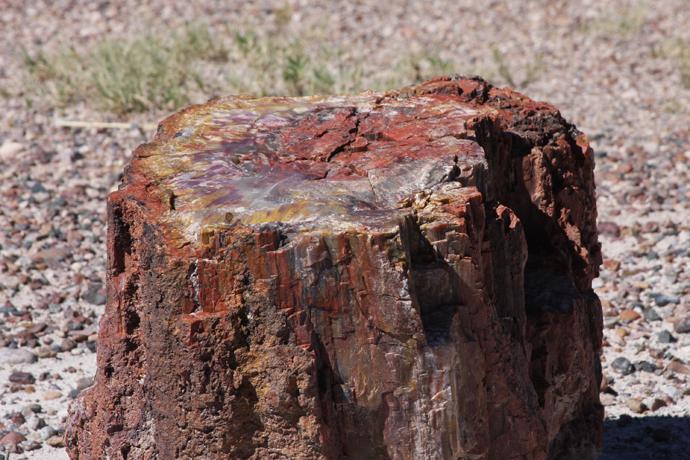 Arizona Petrified Wood Sterling Necklace Natural AZ Agatized Wood Fossilized