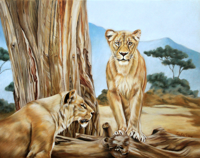 LIONES lion big cat African wildlife painting Sandrine Curtiss ORIGINAL Art