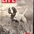 Life Magazine, February 25 1946