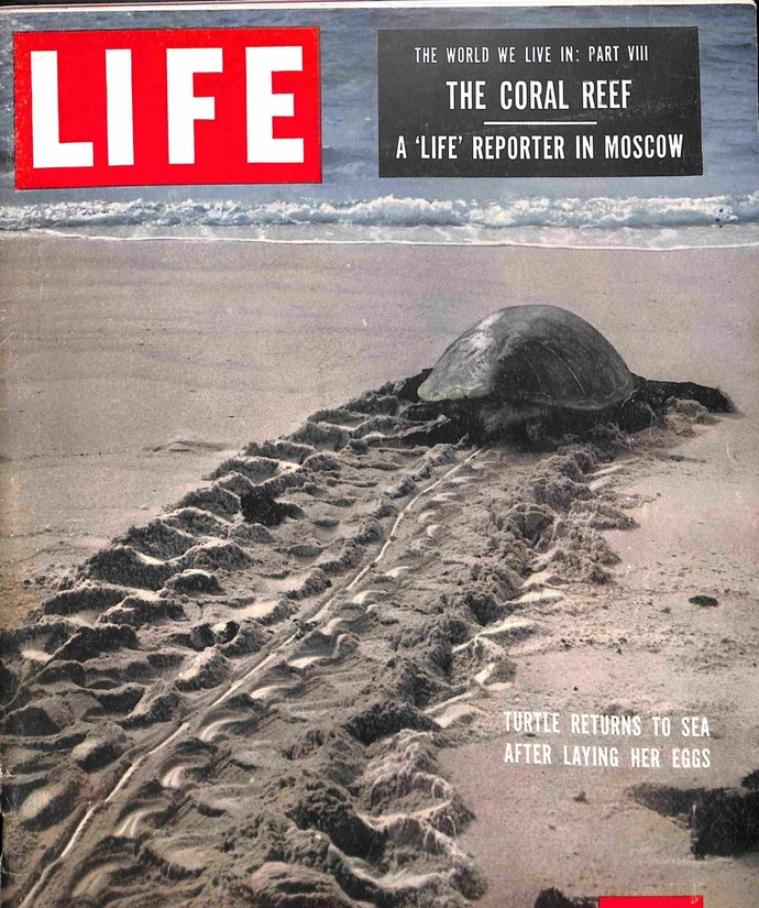Life, February 8 1954
