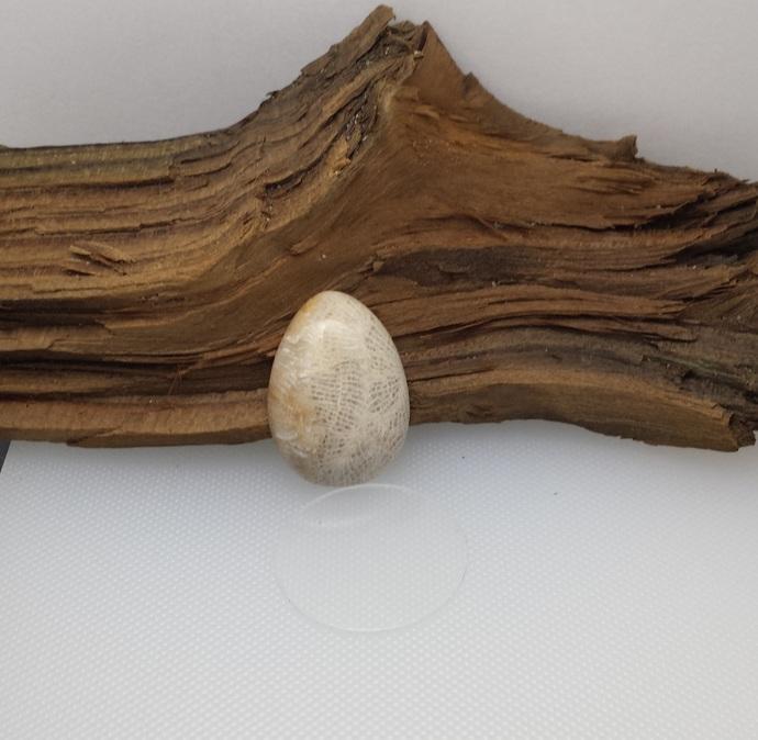 Agatized Brain Coral Fossil Cabochon