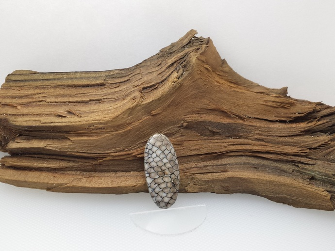 Snakeskin Agate - Rare Ancient Agatized Fish Fossil