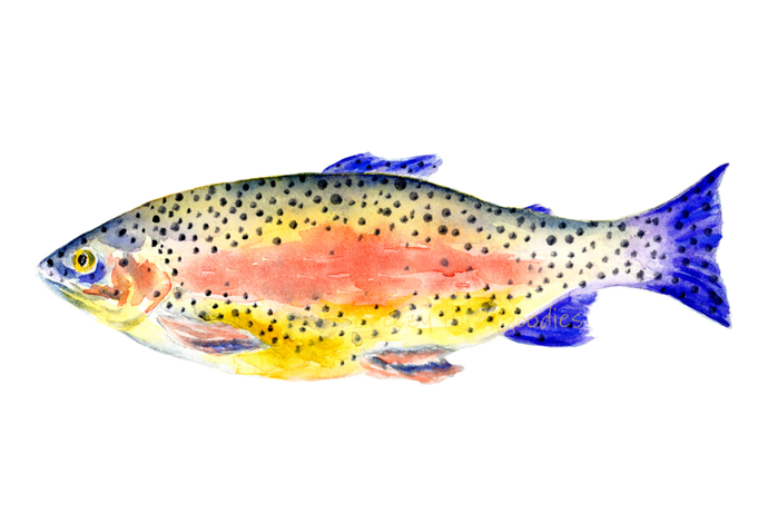 Trout Print, Rainbow Trout Watercolor, Fishing Gift, Colorful Wall Art, Lake