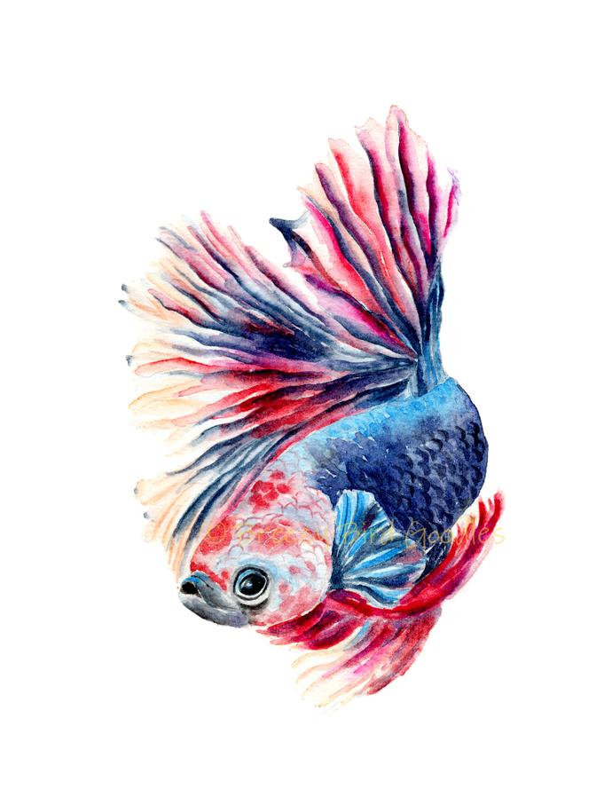 Fish Print, Betta Fish Painting, Betta Fish Art, Betta Fish Gift, Colourful