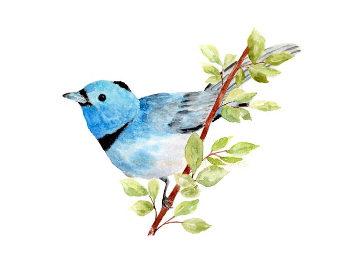 Bluebird Print, Watercolor Bluebird, Passerine Thrush bird on Branch, Bluebird