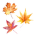 Maple Leaves Print, Autumn Leaves Print, Watercolor Maple Leaf, Watercolour
