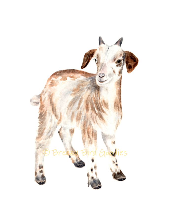 Baby Goat Print