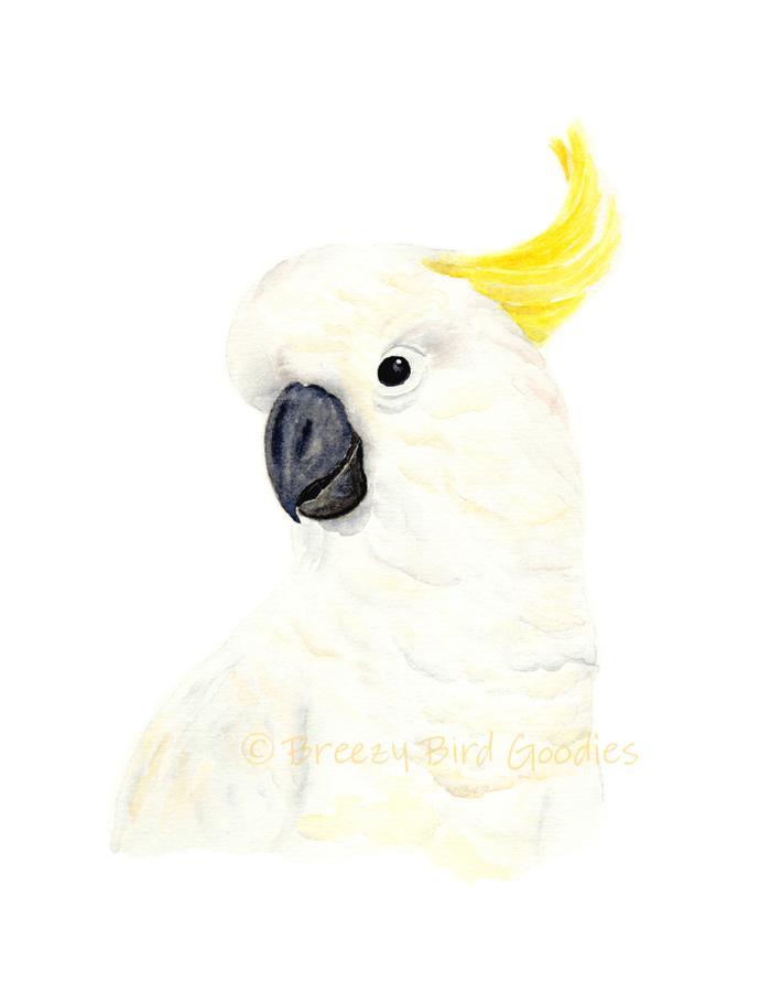 Sulphur-crested Cockatoo Print