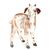 Farm Yard Animals Set of 4 Prints