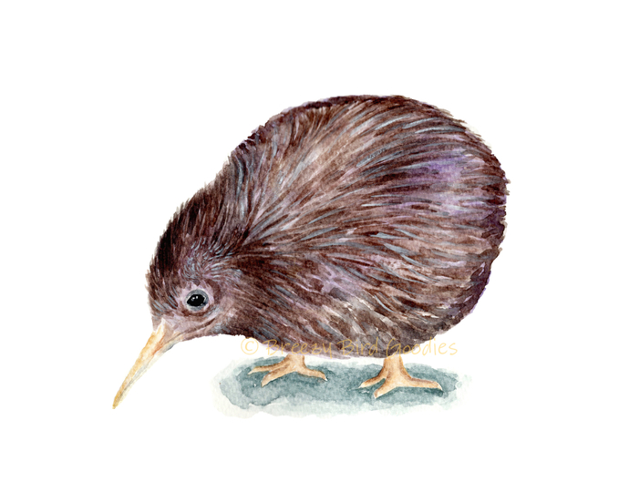 Kiwi Bird Print, Watercolor Kiwi, New Zealand Kiwi, Flightless Bird Print,