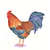 Rooster Print, Farm Bird Print, Watercolour Rooster, Farm House Decor, Colourful