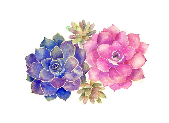 Pink Succulents Print