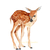 Little Fawn Print, Watercolor Fawn, Watercolor Deer, Woodland Animal Print, Cute