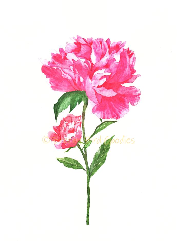 Peony Rose Print, Watercolour Print, Peony Print, Botanical Art, Flowers Print,