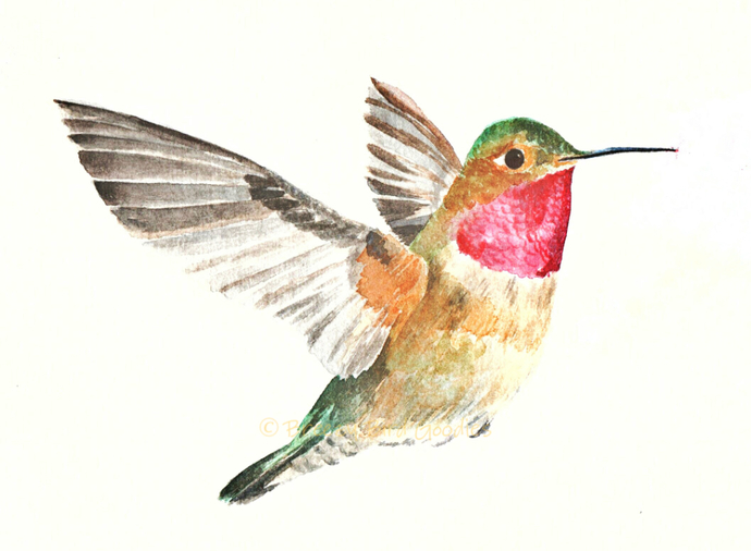 Hummingbird Print, Watercolour Hummingbird, Bird Art, American Bird Print, Bird