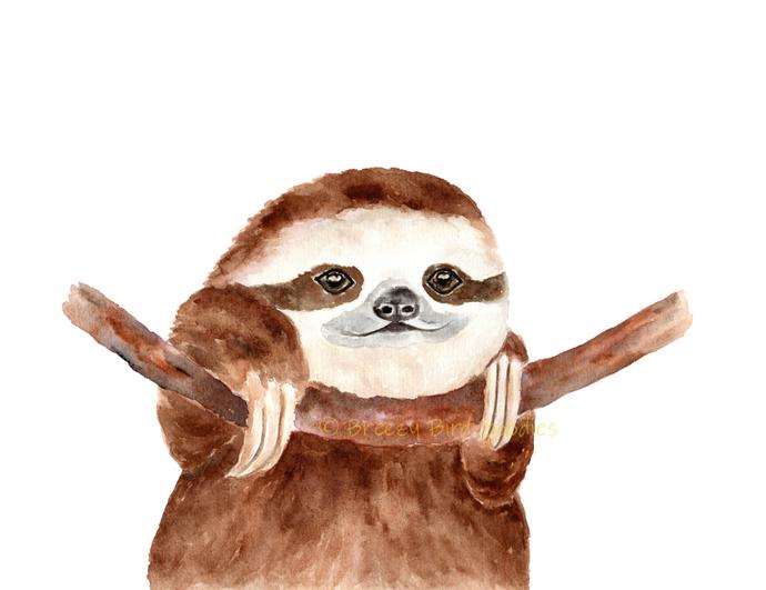 Sloth Print