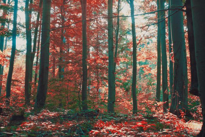 forest photo print, wall art decor, woodland, wanderlust,  modern, trees