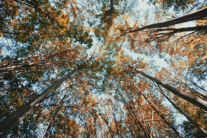 forest photo print, wall art decor, woodland, wanderlust,  modern, trees 8x12