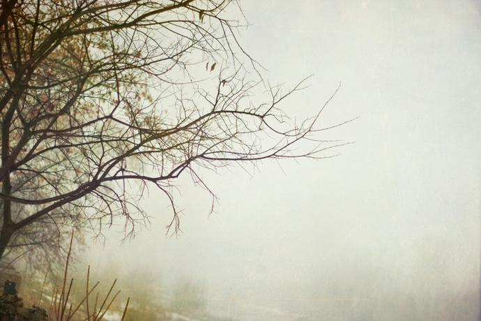 forest photo print, wall art decor, woodland, wanderlust,  modern, trees,