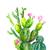 Cactus Print No. 2, Cactus Gift, Cactus Decor, Cacti Print, Green Decor, Prickly
