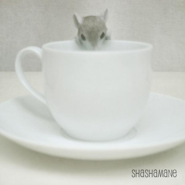 Dormouse at the tea party 8x8 Alice mood photo print