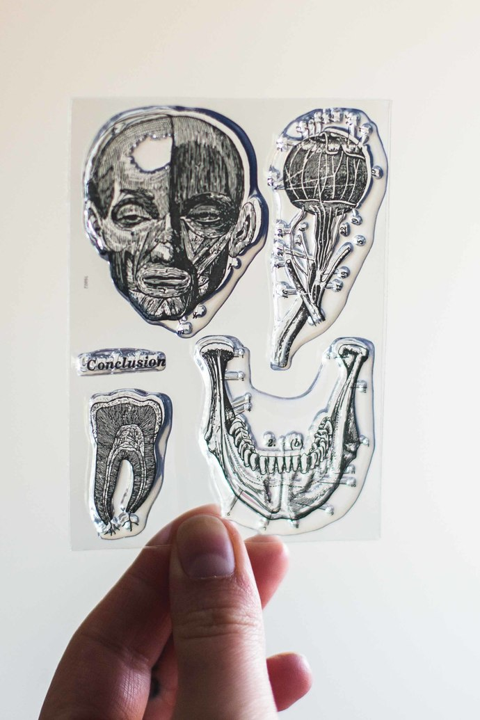 Anatomy II clear stamp set - decorative planner stamps suitable for any planner