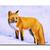 "FOX 14 vixen kit renard watercolor painting Sandrine Curtiss ORIGINAL Art 5x7"""