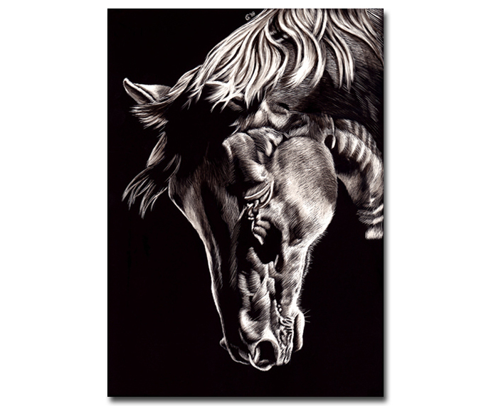 HORSE 12 mare stallion scratchboard scratch art painting Sandrine Curtiss