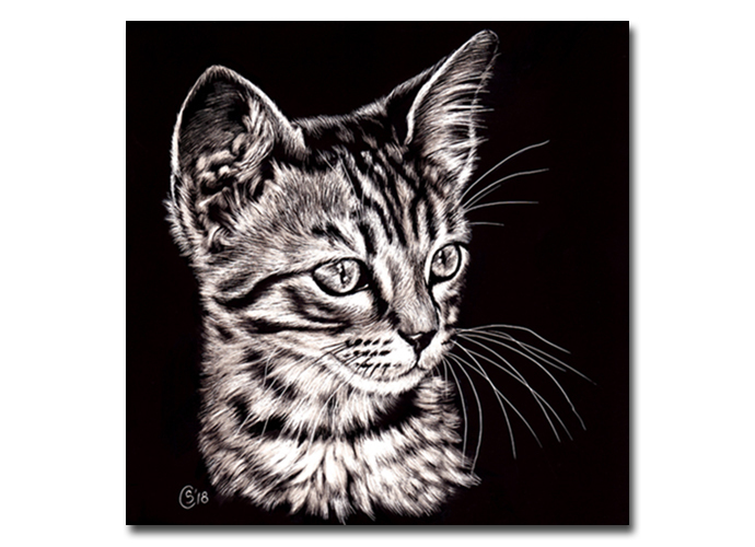 TABBY 125 cat kitten chat scratchboard painting Sandrine Curtiss ORIGINAL Art