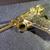BIOHAZARD 3 Promo Gold Luger w/ Wooden Glass Box - Hong Kong Comic Capcom