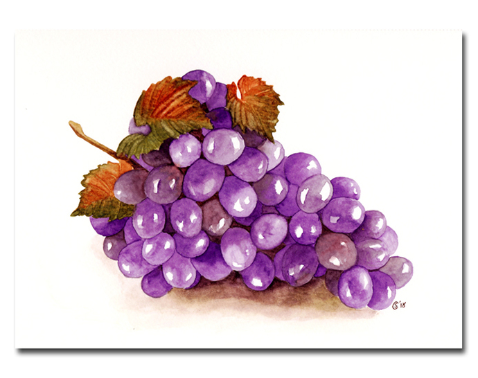GRAPES fall fruits grape de raisins watercolor painting Sandrine Curtiss Art