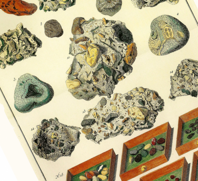 Fossils And Geodes 2001 Albertus Sebau0027s Cabinet Of Natural Curiosities  Poster