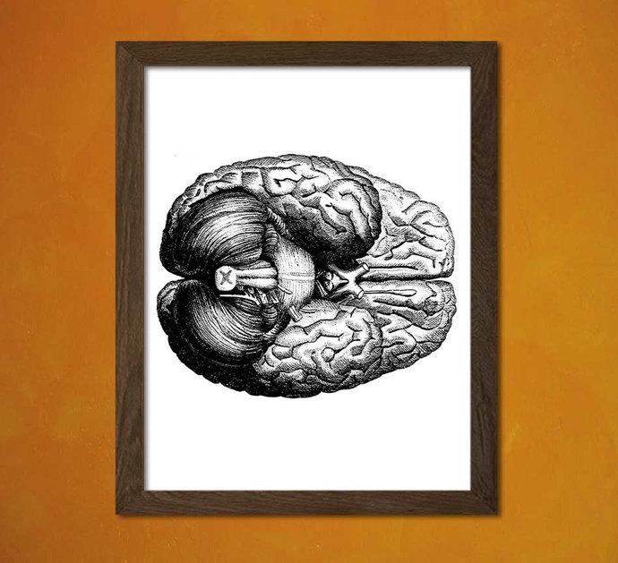 Brain Anatomy Print - Medical Decor Human Anatomy Home Decorating