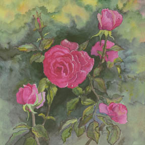 """""""Morning Dew"""" Giclee Paper Print by Carol Thompson"""