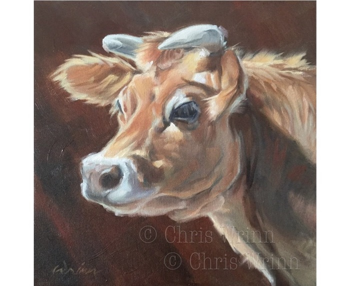 Jersey Cow Oil Painting Cow Art on 12x12 inch Gallery Wrap Canvas, Farm Animal