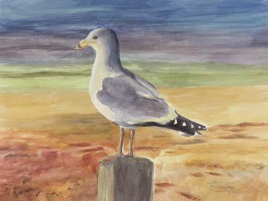 """Ring-Billed Gull"" Giclee Paper Print by Carol Thompson"