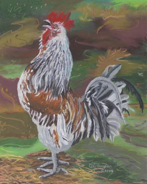 """Proud Rooster"" Giclee Paper Print by Carol Thompson"