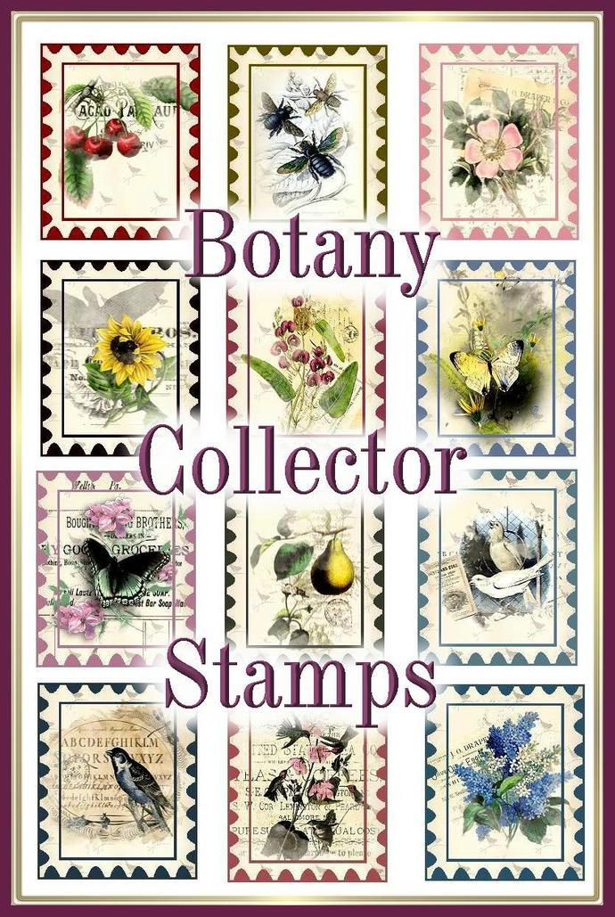 picture regarding Printable Postage Stamps referred to as Traditional Botany Collector Stamps Preset of 24 - Quick Obtain - Electronic Printable