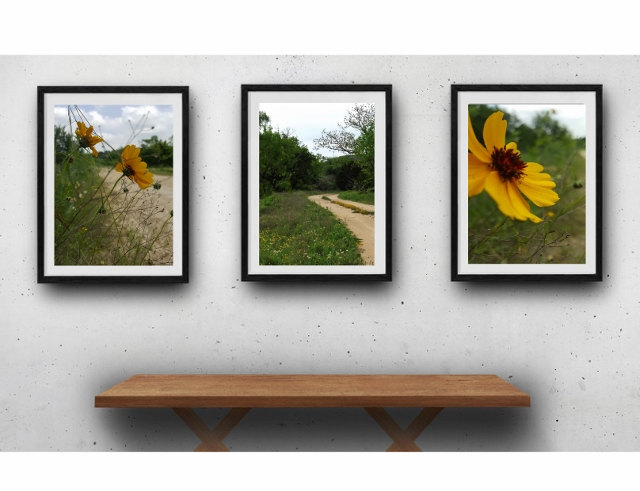Nature photography print set, wildflowers, rustic modern, gift for her, country
