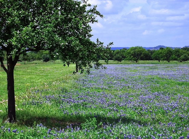 Nature photography, fixer upper, garden art, country decor, wildflower print,