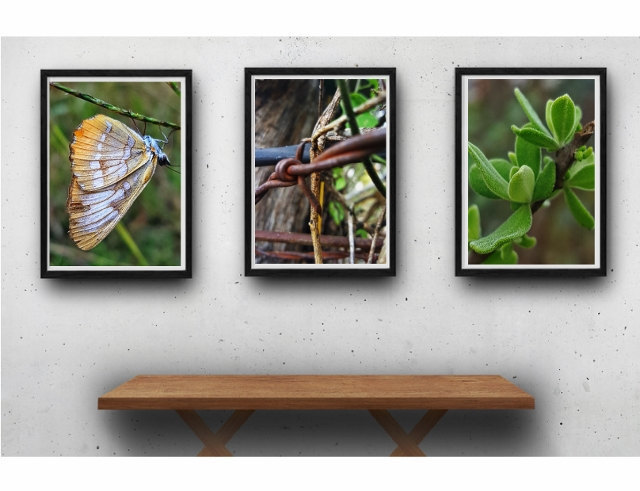 Nature photography print set, farm photography, rustic modern, garden art,