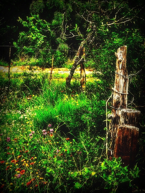 Nature photography, fixer upper, garden art, country decor, wildflower print,