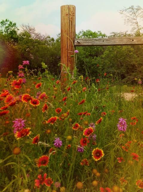 Nature photography, flower print, garden art, country decor, fixer upper,